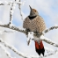Snow Bird. Photograph by P. Vaudry, National Geographic Your Shot