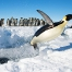When Penguins Fly. Photograph by Christopher Michel, National Geographic Your Shot