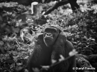 Lost in Thought. Photograph by Daryl Tannis,...